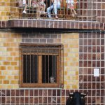 """LOS TOROS EN FAMILIA"" DE ALBERT DE JUAN SAN ANTONIO"