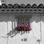 7A+Ventana+de+flores+W