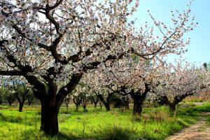 maria-pilar-julian-ruiz-flores-de-primavera