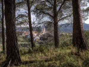 ramón saez carabal las pinadas de Toras